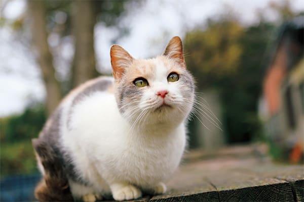 【今週のねこキュン!】女優猫ドロップに会ってきた!