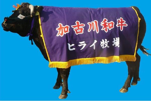 兵庫県加古川市では、500万円の寄付で牛1頭など驚きの返礼品が