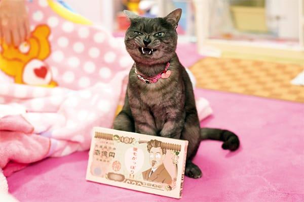 【今週のねこキュン!】ニヒルな笑顔にメロメロ
