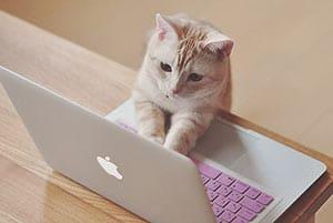 猫2ちゃんねらーキター――( ゚∀゚)――!