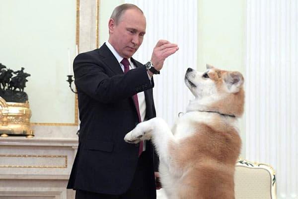 『秋田犬「ゆめ」写真:ロシア大統領府』