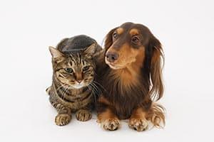 大切な家族の一員のペットを「突然死」から守る方法