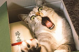 もしも贈答品でネコが届いたら