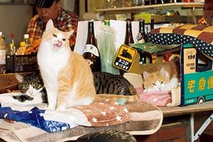 【ニャイス・トゥー・ミート・ユー!】ねこ店員が働く居酒屋