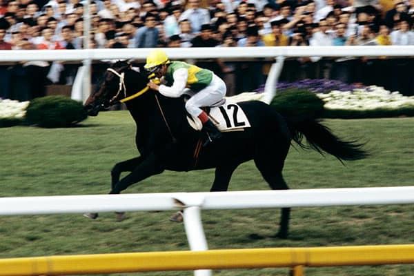 『1983年、常識破りの後方一気で三冠馬となったミスターシービー(写真:JRA)』