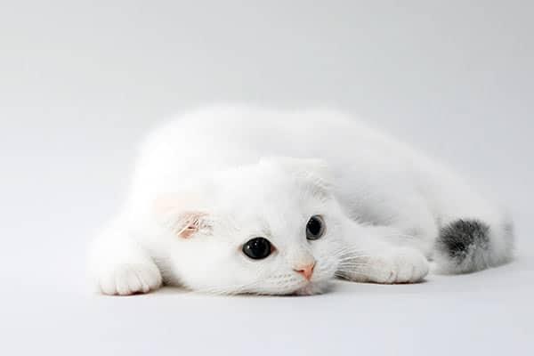 空前のブームで判明「猫の値段」はどうやって決まるのか?