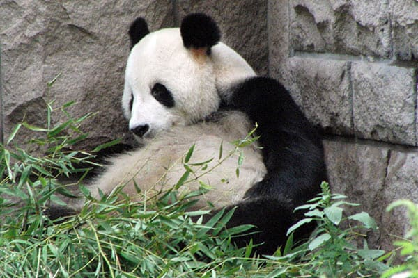 TBS安住紳一郎が上野のパンダ「シャンシャン」命名を的中させる