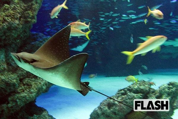 伊集院光「いつかサンシャイン水族館のタカアシガニに食べられたかった」