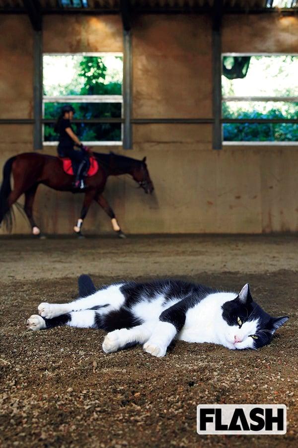 【ニャイス・トゥー・ミート・ユー!】乗馬クラブのねこ