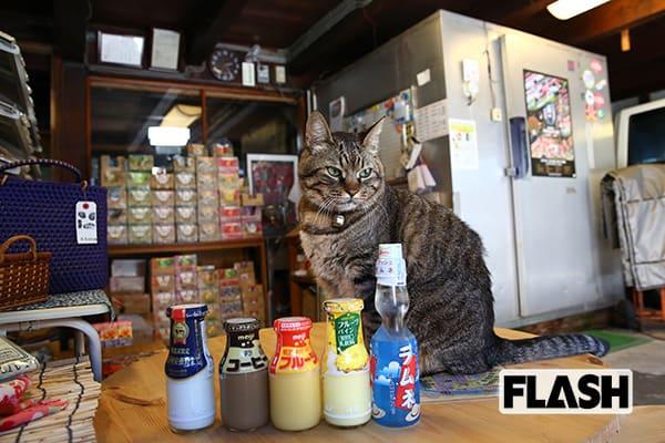 【ニャイス・トゥー・ミート・ユー!】牛乳屋さんのねこ