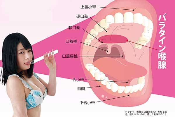 口の中の性感帯「パラタイン喉腺」は脳イキのスイッチ