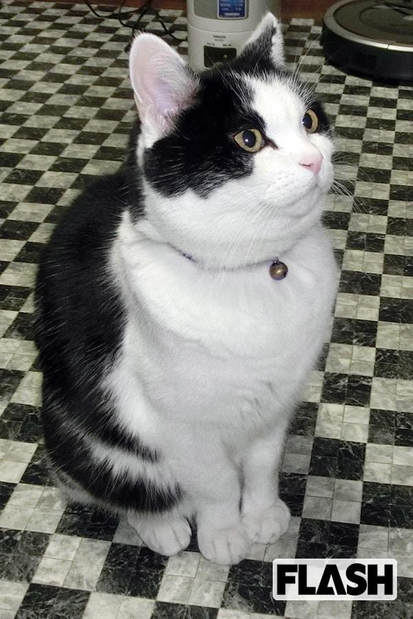 ガッツ石松が愛猫を語る「自分をねこだと思っていない幸せ者」
