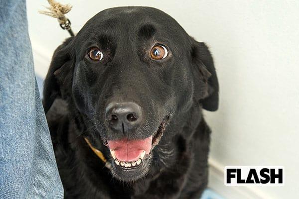 的中率ほぼ100%「がん探知犬」ならニオイでガンがわかる!