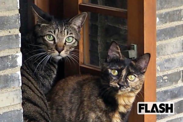 ELT持田香織が語った愛猫「歌声に合の手のようなものを…」