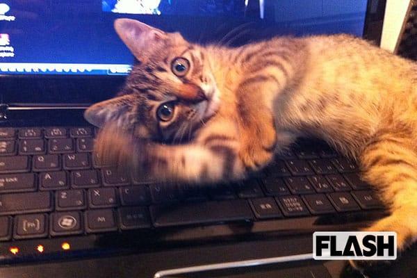 古坂大魔王の愛猫は、家に帰ると『おかえり』としゃべる