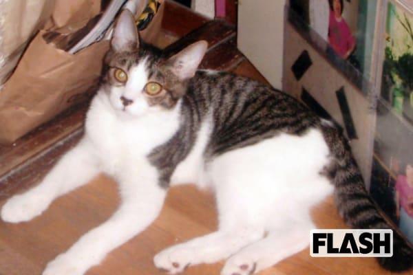 林家ペー・パー子夫妻の愛猫は「出来のいい息子みたい」