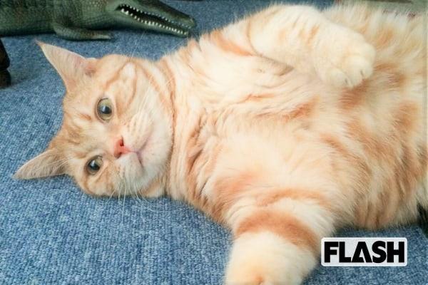 愛猫を「彼氏」と呼ぶ「おのののか」甘えん坊プレイに首ったけ