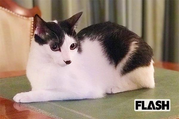 爆笑問題を支える太田光代社長、愛猫の名は『探偵物語』から