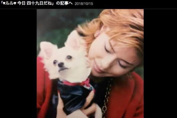 小柳ルミ子、15年一緒だった愛犬の死で重度のペットロス