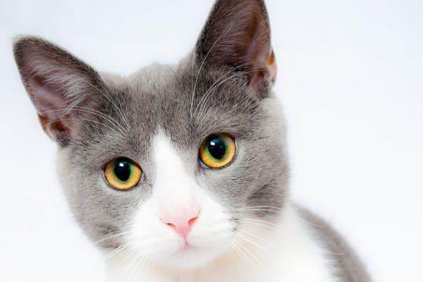 佐藤健、猫が好きすぎて「乗られたら何時間も我慢」