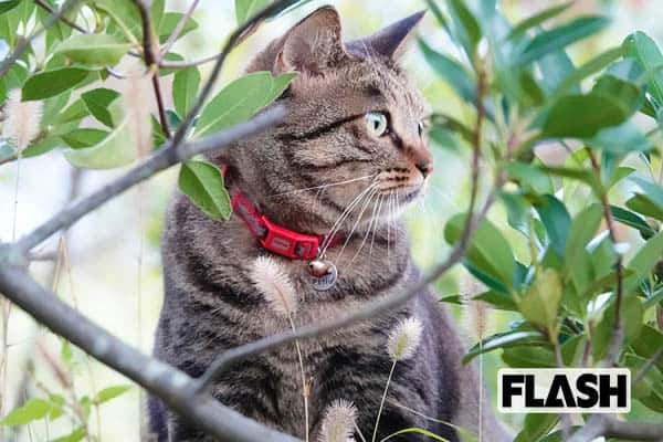 大衆演劇のプリンス門戸竜二の愛猫は「ツンツンデレ」