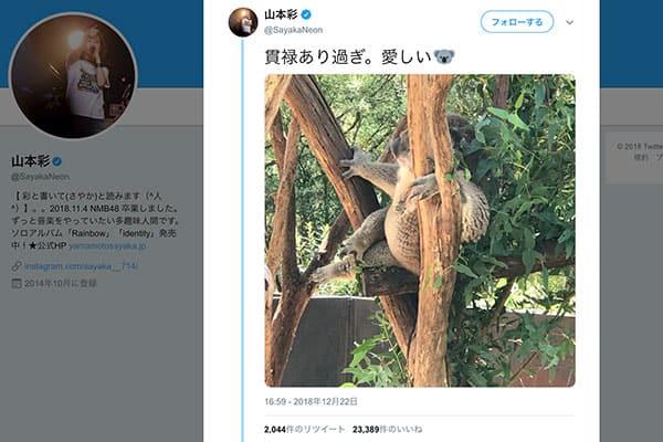 山本彩、オーストラリアから投稿したコアラ画像で大喜利に