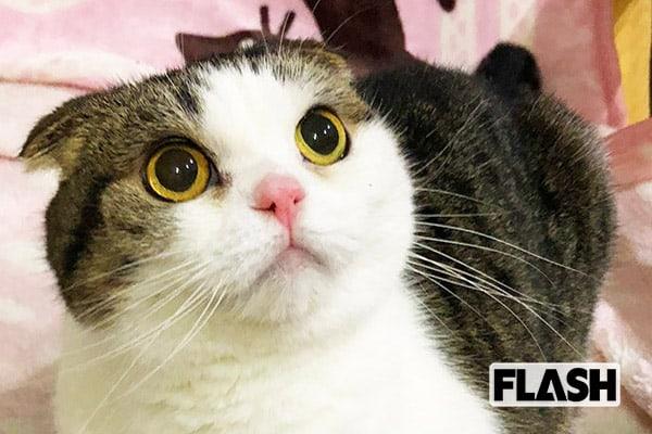 『科捜研の女』をものまね「メルヘン須長」愛猫が害虫退治