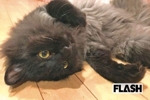 最上もが、白ひげの黒猫は「かまってちゃん」の怒りんぼ