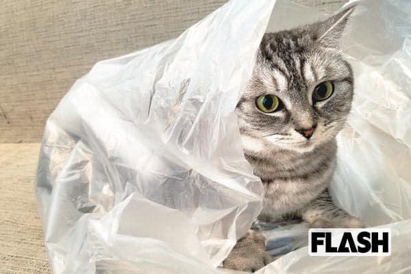 山崎真実、愛猫の「勝手に餌を食べる特技」を直して〜!