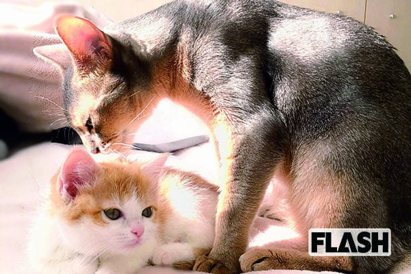 声優「山崎はるか」怖がりと肝っ玉、2匹の愛猫に囲まれて