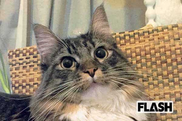 「キンタロー。」2万円の枕を特注するも、使うのは愛猫ばかり