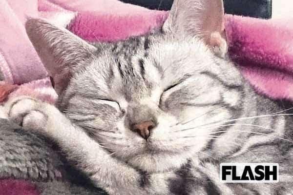 はいだしょうこ、愛猫の性格は「ねこをかぶってる!」