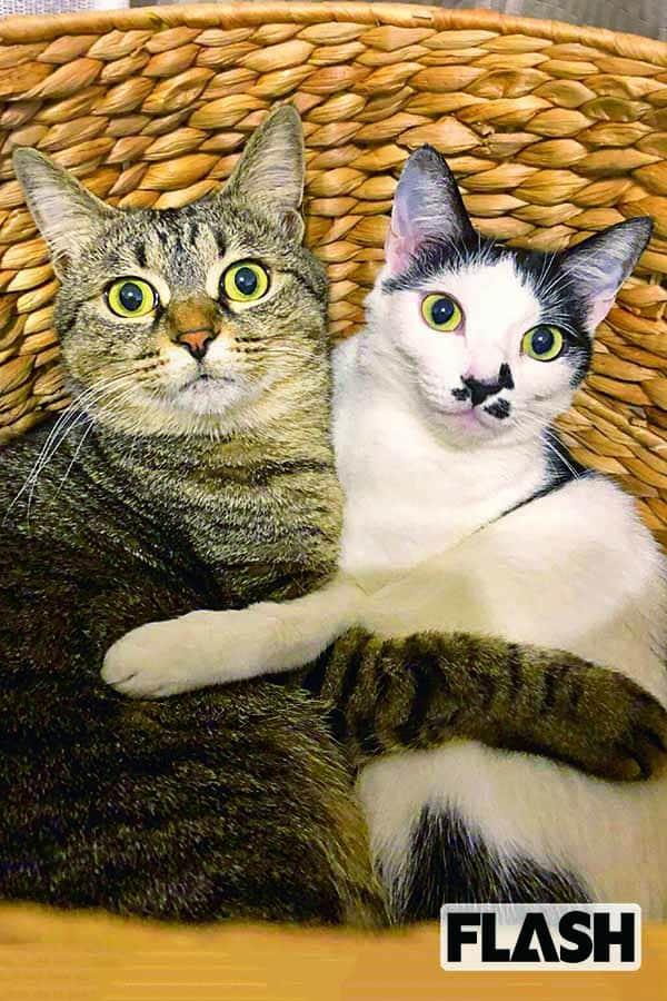山本高広、施設から引き取った愛猫が甘えてくれて…キター!