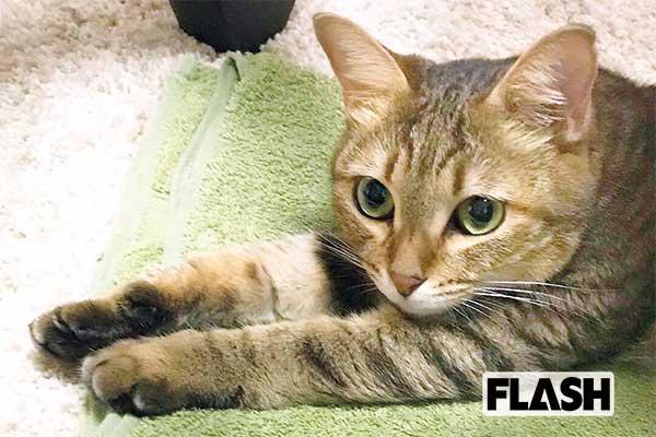 愛猫はかまってちゃん「高月彩良」布団に潜ってきてキュン死