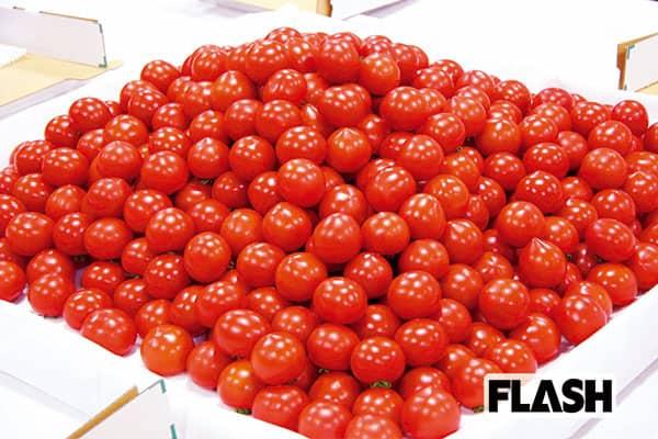 やんごとなき「皇室献上品」福井の宝石と呼ばれるトマト
