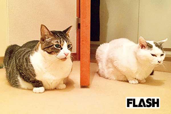 鈴木蘭々、愛猫の性格は「ジャイアンなのに時に甘えん坊」