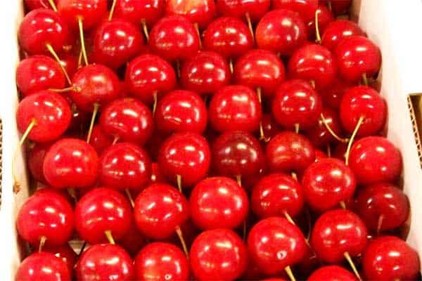 やんごとなき「皇室献上品」両陛下も収穫されたさくらんぼ