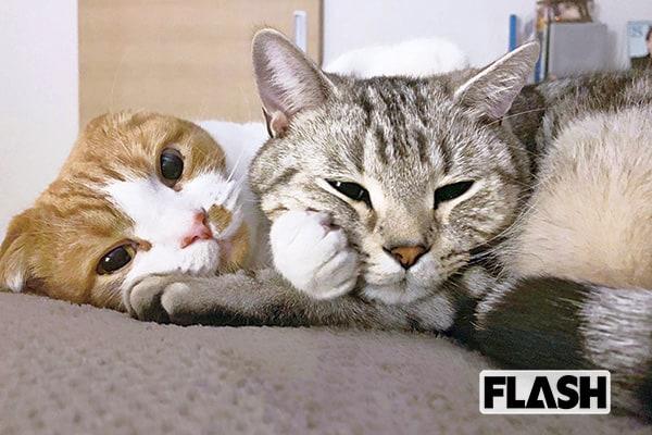 知英、落ち込んでたら顔をスリスリしてくれた愛猫に涙