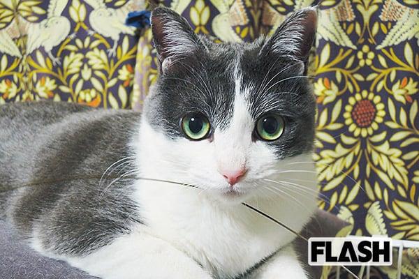 ワハハ本舗「大久保ノブオ」愛猫の難病を寝ずに看病で克服