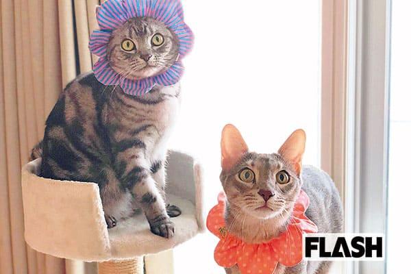 愛猫の名は天才芸術家から「杉本有美」女好きで甘えん坊(笑)