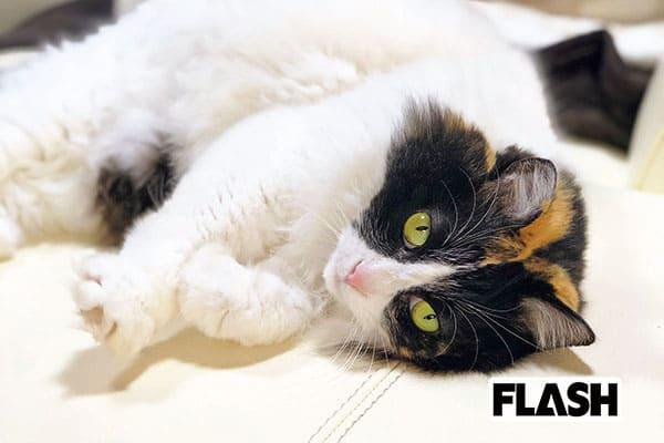 神野美伽、おしゃべりな愛猫は杉本彩が保護した被災地ねこ