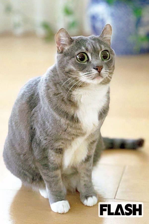 愛猫はモフモフ好き「高見恭子」毛布やタオルを足でコネコネ