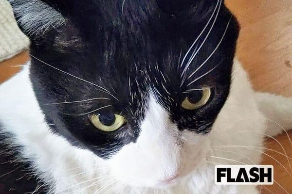 愛猫の名はジブリから「伊藤かずえ」10kgの巨体で毎日ドスン