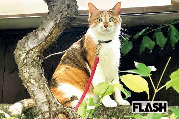 山田稔明、亡き愛猫とそっくりの野良を飼う「帰ってきた!」