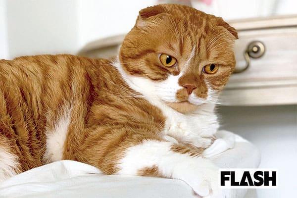 古河由衣、愛猫の鼻ぺろチューは「ザリザリして痛い(笑)」