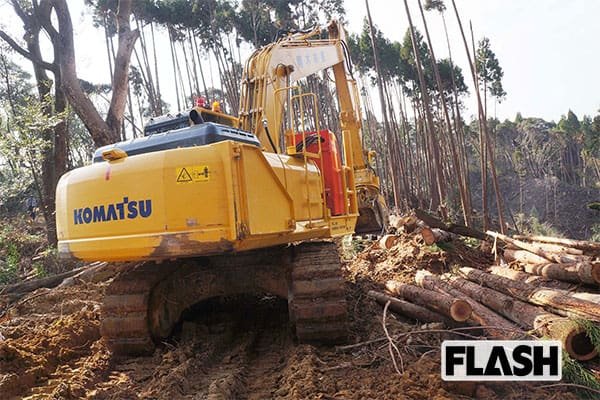 中国が悲鳴「日本よ、『盗伐木材』を送りつけるな!」