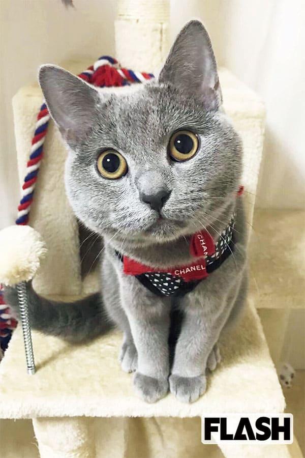 松山メアリ、愛猫は激カワな顔して「いびきがとんでもない!」