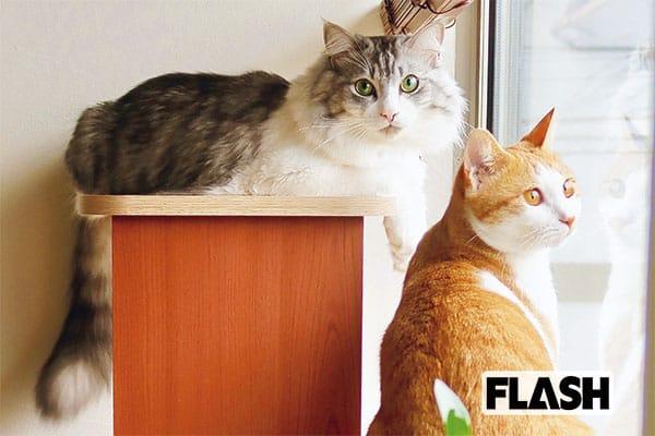 愛猫が悪性腫瘍で瀕死に「近藤研二」先進医療でいまは寛解