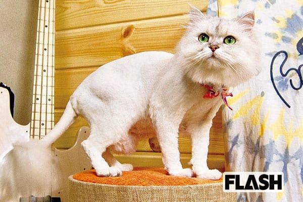 元「チャットモンチー」福岡晃子、高齢の愛猫はお姫様気質