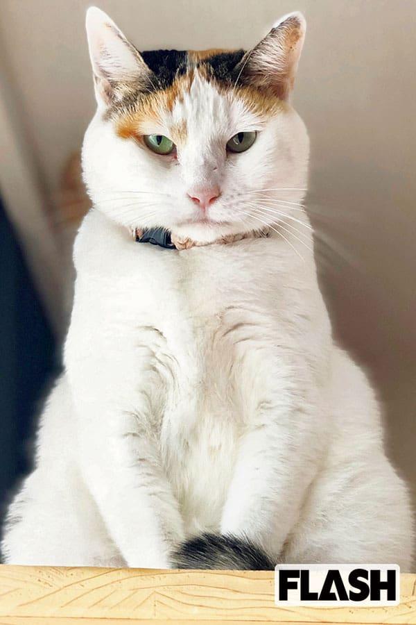 峯村リエ、愛猫にひとめ惚れした理由は「殺し屋のような瞳」